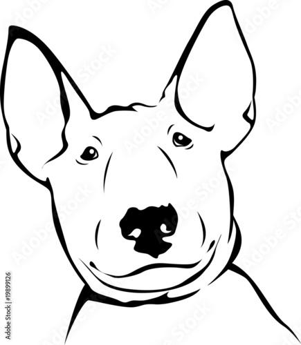 Foto Bull Terrier - Portrait 03