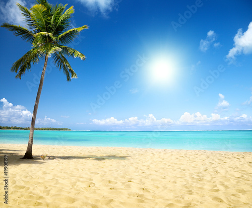 Wall mural - sea and coconut palm