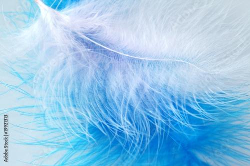 Bird's feather #19921313