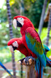 canvas print picture - Beautiful colorful parrot