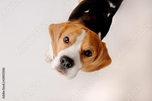 Spoed Foto op Canvas Hond Dog