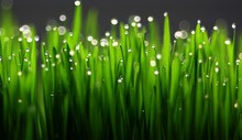Drops Of Water On The Grass