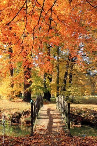 Poster Oranje eclat Herbst 6
