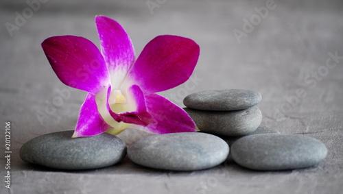 fleur d'orchidée rose fushia et galets
