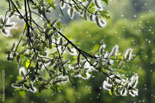Pollen - Frühling Fototapeta