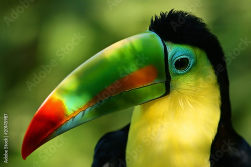 In de dag Papegaai Portrait of a Toucan and its colorful beak
