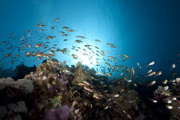 Fototapeta na wymiar golden sweepers and ocean