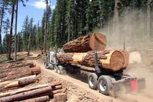 Logging Truck With Huge Load