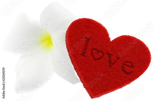 Coeur Rouge Love Saint Valentin Fleur Blanche Fond Blanc Buy