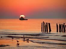 Sea Gulls On The Beach - At Sunset