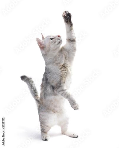 Valokuva  Cat
