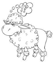 Schaf, Pudel, Rasiert, Gefärbt, Friseur, Frisur, Friesiert