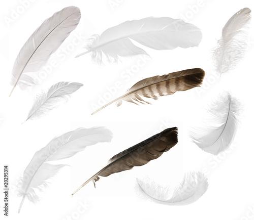 nine isolated feathers