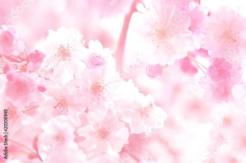 rozowe-kwiaty-tlo
