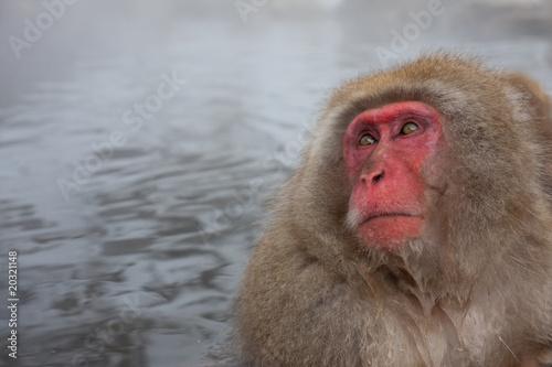 In de dag Japanese snow monkey