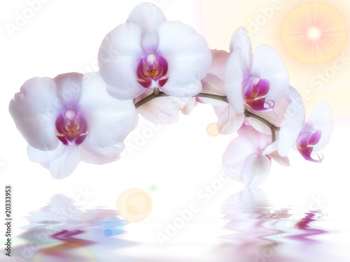 Papiers peints Orchidée orchidées au soleil