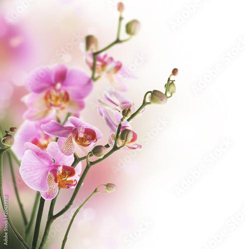 piekna-orchidei-granica-odizolowywajacy-na-bielu-selekcyjna-ostrosc