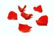 canvas print picture - einige rote Blütenblätter
