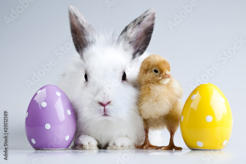 Photo Bunny and chick