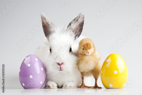 Fotografering Easter bunny on chick white background