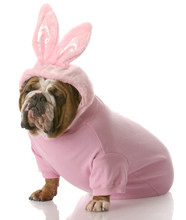 Dog Dressed Up As Easter Bunny