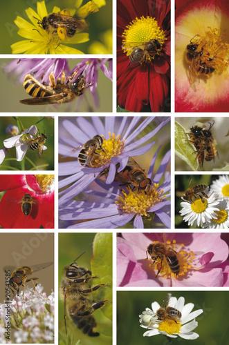 Fotografie, Obraz  abeille