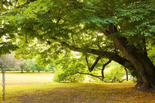 Photo Stands Road in forest Centenary linden from Cheverny Chateau gardens. France