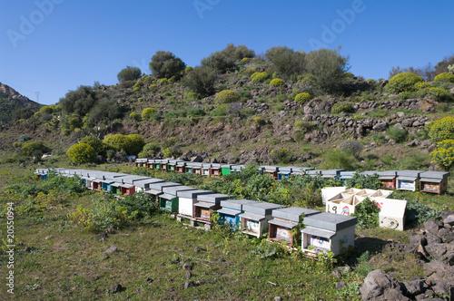 Obraz na plátně Beekeeping