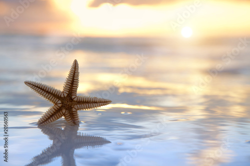starfish shell in the sea on sunrise background Wallpaper Mural