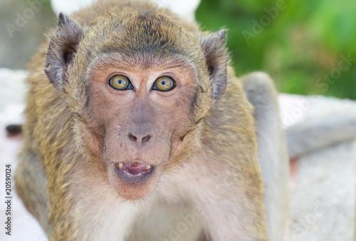 Foto op Aluminium Aap Monkey