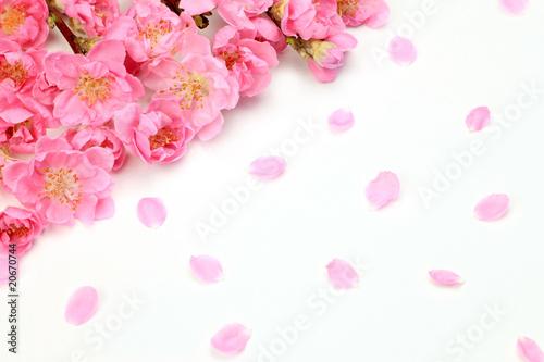 Deurstickers Kersenbloesem peach blossom