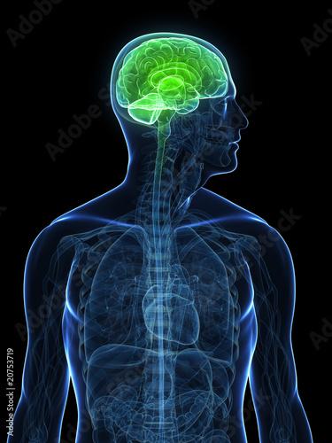 Vászonkép transparenter Körper mit gesundem Gehirn