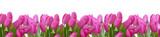 Fototapeta Tulipany - blumenhintergrund,tulpen