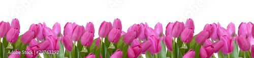 Deurstickers Tulp blumenhintergrund,tulpen