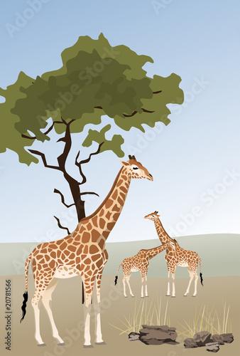 Foto op Aluminium Zoo Giraffe