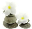 galets fleuris, fond blanc