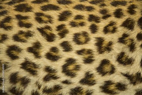 Poster Leopard leopard fur texture