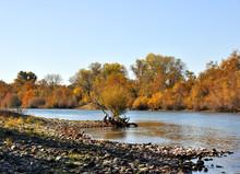 Sacramento River In The Fall