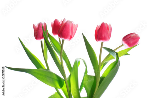 Poster Fleuriste holiday tulips bouquet isolated on white