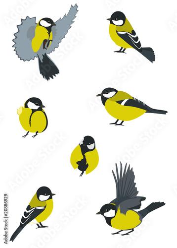 Spoed Foto op Canvas Vogels, bijen Set of Birds