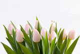 Fototapeta Tulipany - weiße tulpen-blumenhintergrund