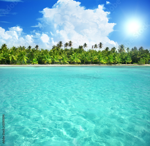 Poster Tropical plage palms and caribbean sea