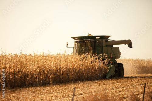 Obraz na plátně harvesting