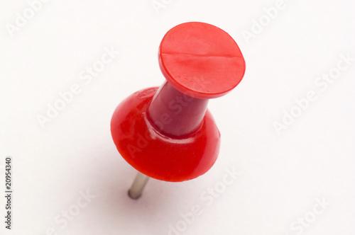 Fotografía  punaise rouge