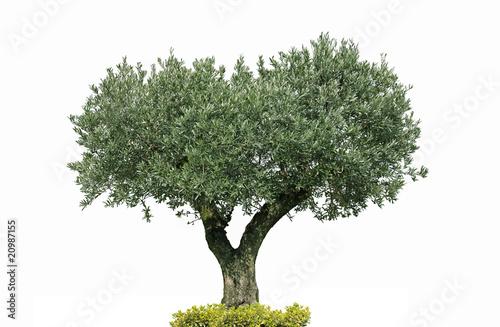 Foto op Aluminium Olijfboom oliver centenaire