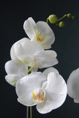 Panel Szklany Kwiaty Orchidées, 2010