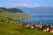 Lavaux vineyards on Lake Geneva, Switzerland