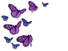 Colorful Butterflies On White Background With Clipping Paths