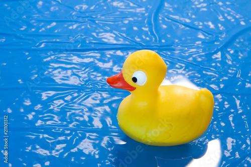 Aluminium Prints River, lake toy duck