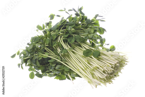 Garden Poster Plant Snow Pea Sprouts Isolated